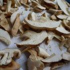 Pilze trocknen und dadurch haltbar machen - wir zeigen 4 unterschiedliche Methoden