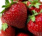 Frische Erdbeeren einfrieren - ob als ganze Beere oder als Püree - so geht´s richtig