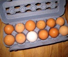 Eierlikör mit frischen Eiern im Thermomix selber machen - ganz einfach und unglaublich lecker