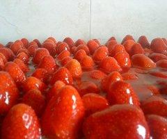 Frisch und unglaublich lecker: Erdbeerkuchen vom Blech