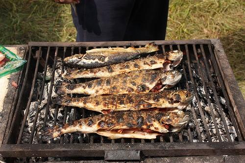 Frische Forellen Vom Grill So Gelingt Die Zubereitung